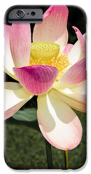 Lovely Lotus Blossom iPhone Case by Penny Lisowski