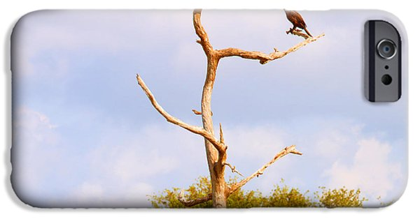 Wild Animals iPhone Cases - Low Angle View Of A Cormorant iPhone Case by Panoramic Images