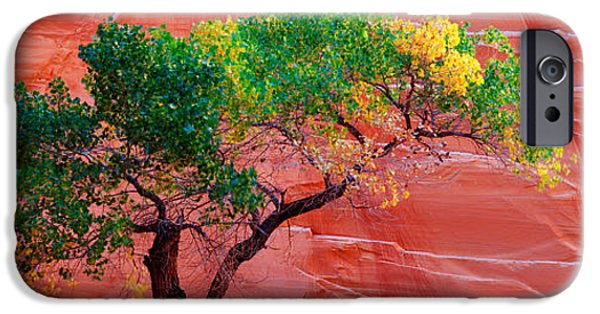 Red Rock iPhone Cases - Low Angle View Of A Cottonwood Tree In iPhone Case by Panoramic Images