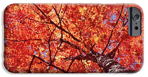 Maine iPhone Cases - Low Angle View Of A Maple Tree, Acadia iPhone Case by Panoramic Images