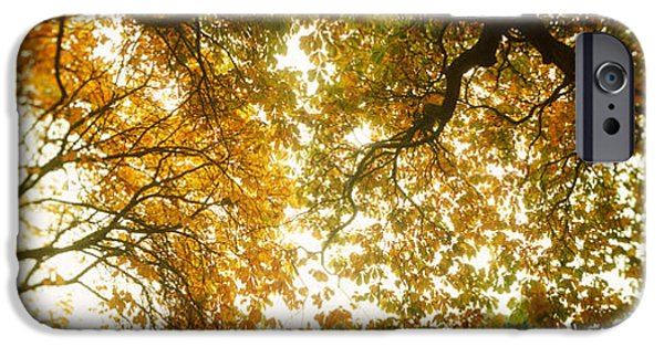 Capitol Hill iPhone Cases - Low Angle View Of Autumn Trees iPhone Case by Panoramic Images