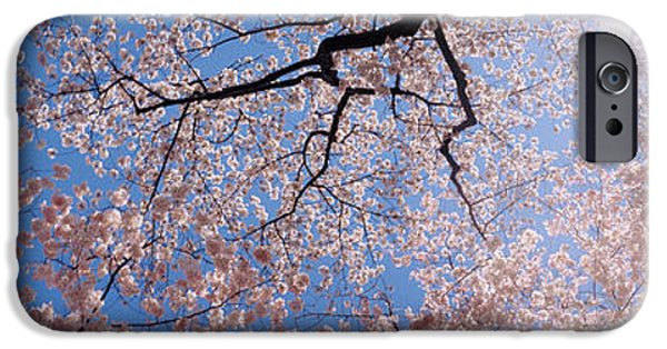 Cherry Blossoms iPhone Cases - Low Angle View Of Cherry Blossom Trees iPhone Case by Panoramic Images