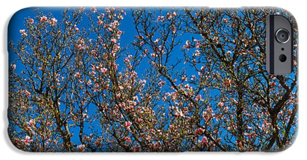 Franklin iPhone Cases - Low Angle View Of Cherry Trees iPhone Case by Panoramic Images