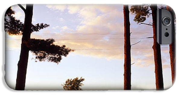 Pines iPhone Cases - Low Angle View Of Pine Trees, Iowa iPhone Case by Panoramic Images