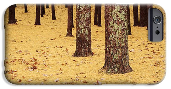 Massachusetts Autumn Scenes iPhone Cases - Low Section View Of Pine And Oak Trees iPhone Case by Panoramic Images