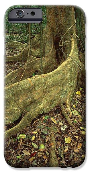 Lowland Tropical Rainforest iPhone Case by Ferrero-Labat