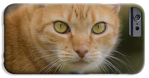 Orange Tabby iPhone Cases - Luci Lu Too iPhone Case by Rich Franco