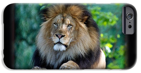Smithsonian iPhone Cases - LUKE Panthera leo iPhone Case by Jonathan E Whichard