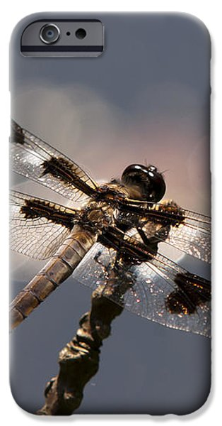 Luminous Dragonfly iPhone Case by Christina Rollo