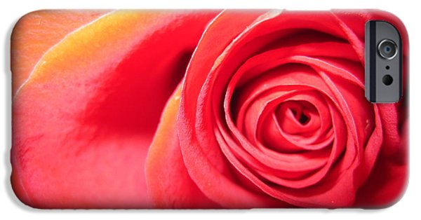 Flora Drawings iPhone Cases - Luminous Red Rose 1 iPhone Case by Tara  Shalton