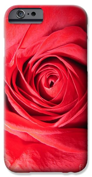 Flora Drawings iPhone Cases - Luminous Red Rose 7 iPhone Case by Tara  Shalton