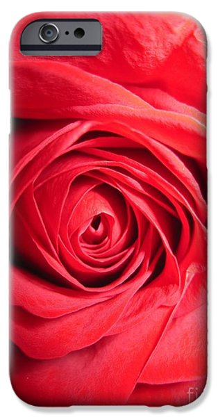 Flora Drawings iPhone Cases - Luminous Red Rose 8 iPhone Case by Tara  Shalton