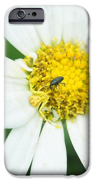 Arachnida iPhone Cases - Lunch Arrives iPhone Case by Douglas Barnett