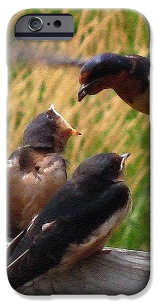 Lunch is Served to the Fourth Baby Barn Swallow iPhone Case by J McCombie