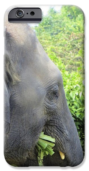 Elephants Pyrography iPhone Cases - Lunch time iPhone Case by Heather Huff