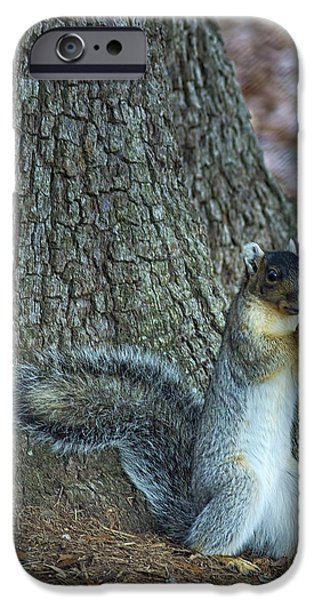 Fox Squirrel iPhone Cases - Lunch Time iPhone Case by Phill  Doherty