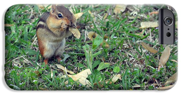 Chip iPhone Cases - Lunch Time Photo B iPhone Case by Barbara Dalton