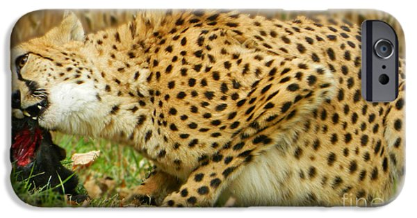 Cheetah Digital Art iPhone Cases - Lunchtime For Cheetah iPhone Case by Emmy Marie Vickers