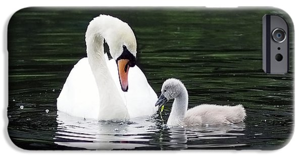Baby Bird iPhone Cases - Lunchtime for Swan and Cygnet iPhone Case by Rona Black