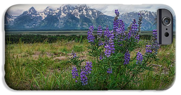 Forest iPhone Cases - Lupine Beauty iPhone Case by Chad Dutson