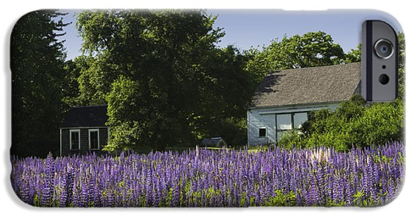Maine Barns iPhone Cases - Lupine Flowers Near Round Pond Maine iPhone Case by Keith Webber Jr