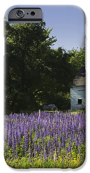 Lupine Flowers Near Round Pond Maine iPhone Case by Keith Webber Jr