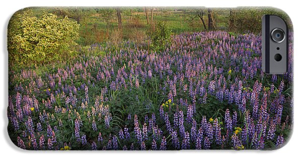 Indiana Landscapes iPhone Cases - Lupine Indiana Dunes National Lakeshore iPhone Case by Tim Fitzharris