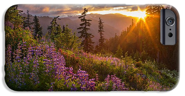 Mount iPhone Cases - Lupine Meadows Sunstar iPhone Case by Mike Reid