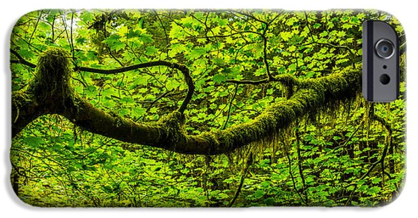 Rainforest iPhone Cases - Lush iPhone Case by Chad Dutson