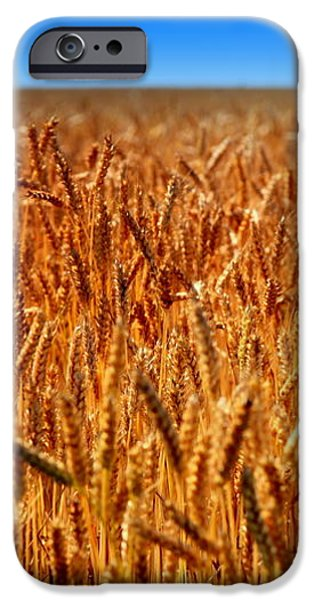 LYING in the RYE iPhone Case by KAREN WILES