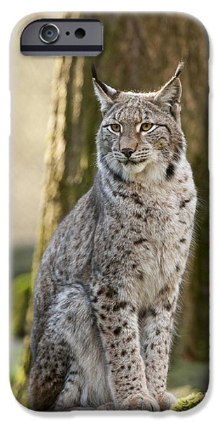 Lynx iPhone Cases - Lynx iPhone Case by Andy-Kim Moeller