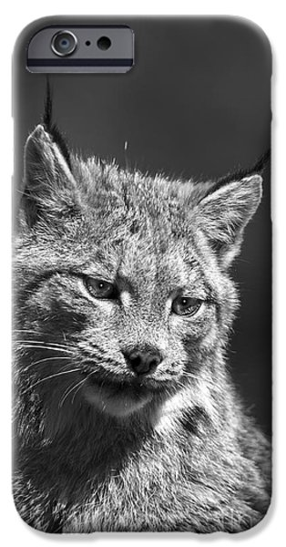 Animals Photographs iPhone Cases - Lynx-animals-image-3 iPhone Case by Wildlife Fine Art