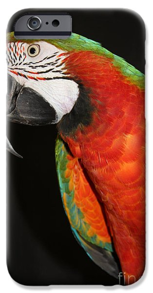 Macaw Profile iPhone Case by JOHN TELFER