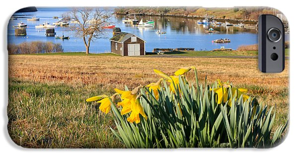 Bailey Island iPhone Cases - Mackerel Cove Daffodils iPhone Case by Benjamin Williamson