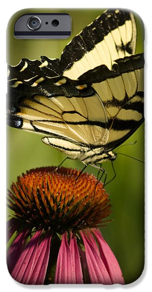 Small iPhone Cases - Macro Butterfly iPhone Case by Jack Zulli