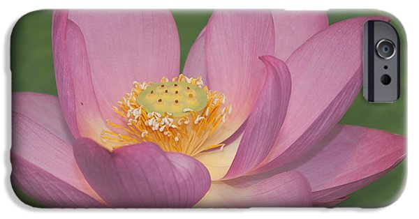 Plant iPhone Cases - Macro Sacred pink Lotus Flower iPhone Case by Beth Wolff