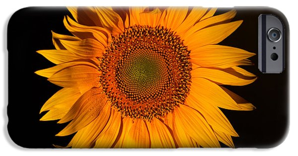 Isolated Pyrography iPhone Cases - Macro sunflower iPhone Case by Victor Georgiev