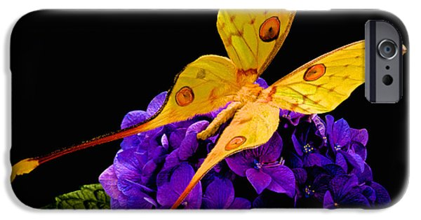 Etc. Photographs iPhone Cases - Madagascan Moon Moth iPhone Case by Leslie Crotty