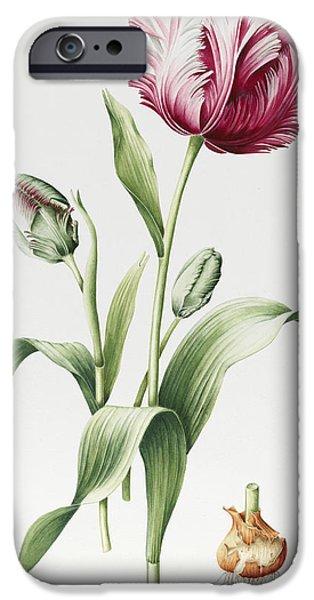 Botanical iPhone Cases - Madame Estelle Rynveld iPhone Case by Sally Crosthwaite