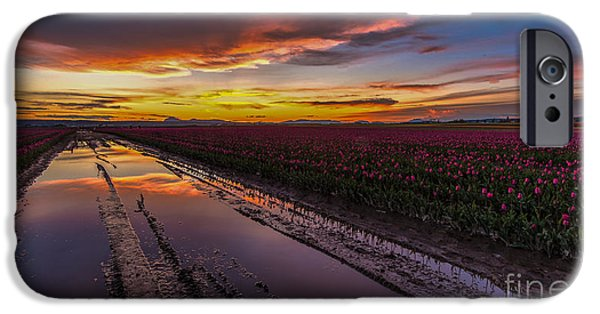 Tulips iPhone Cases - Magenta Fields Tulips iPhone Case by Mike Reid