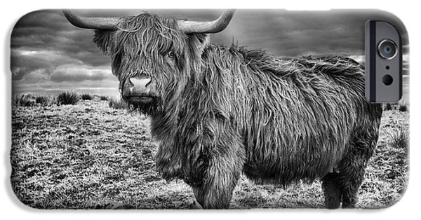 Snowy Day iPhone Cases - Magestic Highland Cow iPhone Case by John Farnan