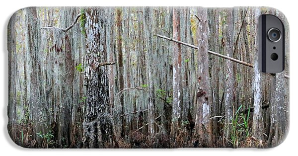 Subtle Colors iPhone Cases - Magical Bayou iPhone Case by Carol Groenen
