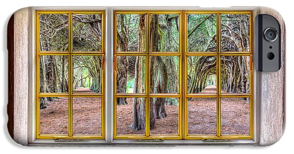 Cabin Window iPhone Cases - Magical Trees iPhone Case by Semmick Photo
