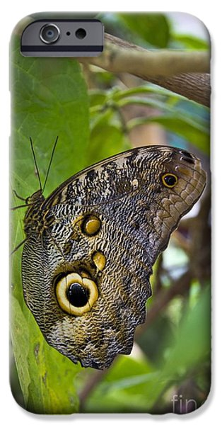 Big Al iPhone Cases - Magnificent Huge Butterfly In Mindo Ecuador iPhone Case by Al Bourassa