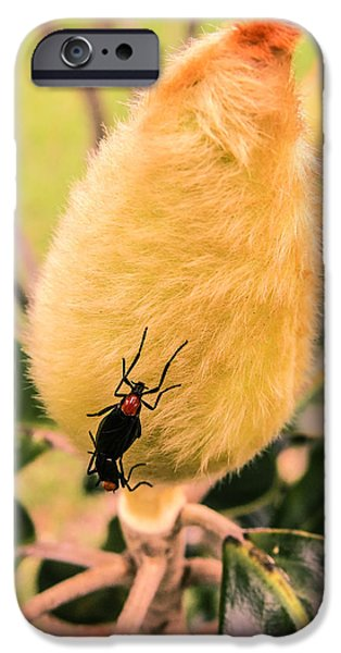 Magnolia iPhone Cases - Magnolia bud with lovebugs					 iPhone Case by Zina Stromberg