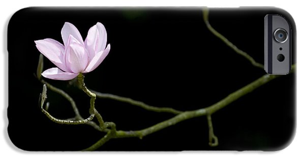 Magnolia iPhone Cases - Magnolia Campbellii Darjeeling Flower iPhone Case by Tim Gainey
