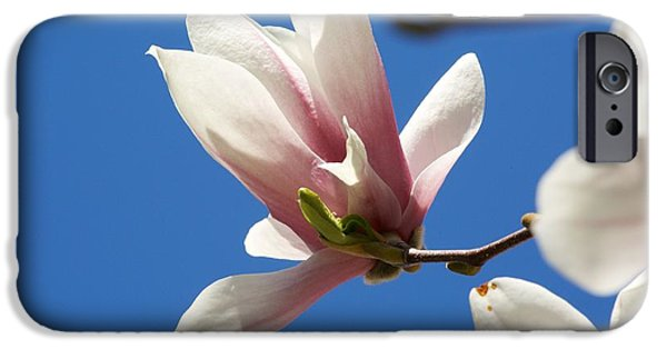 Concord Massachusetts iPhone Cases - Magnolia Flower iPhone Case by Allan Morrison