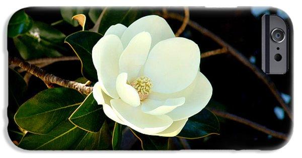 Magnolia Grandiflora iPhone Case by Hanza Turgul