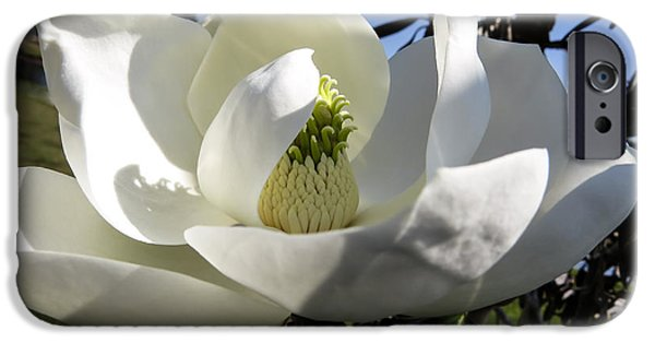 Magnolia iPhone Cases - Magnolia grandiflora iPhone Case by Zina Stromberg