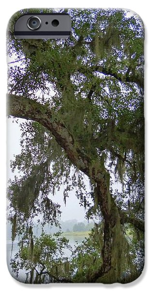 Magnolia Plantation 1 iPhone Case by Ron Kandt